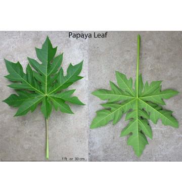 Листья Папайи - лечение, профилактика рака 30 гр