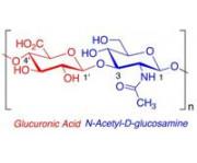Место Гиалуроновой кислоты в косметологии